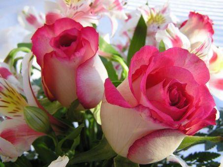 Flowers1(5)